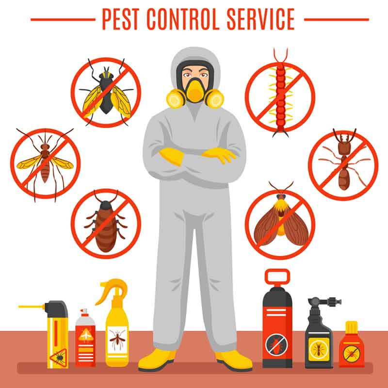 why we need to take advice from a professional pest control service company